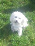 dogsitting_odenwald_0001-01