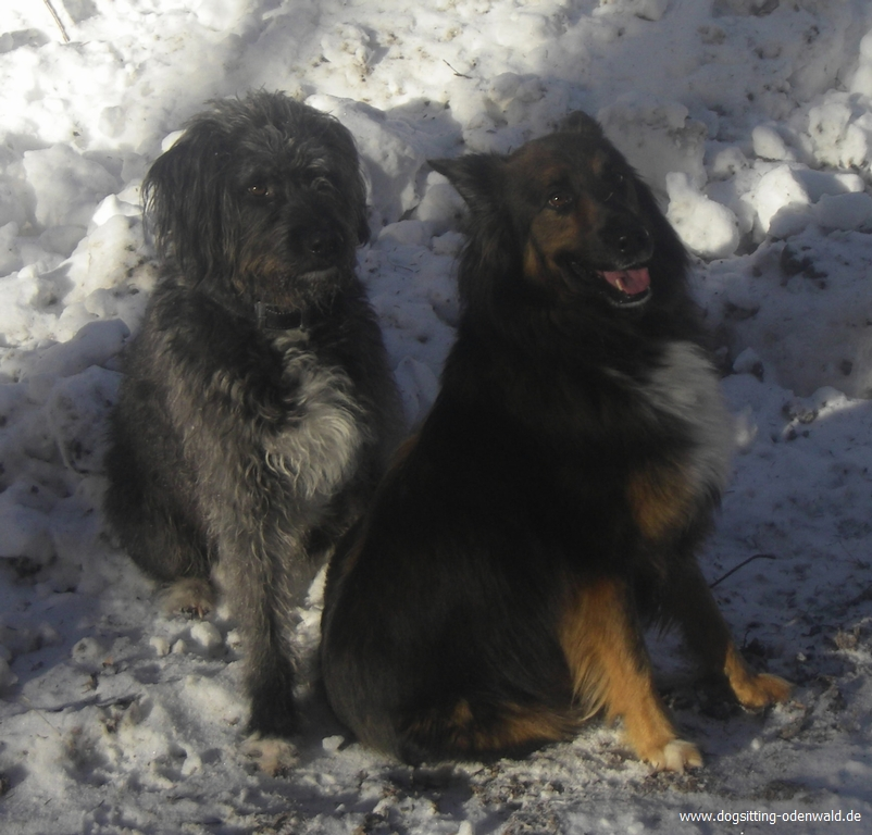 dogsitting_odenwald_0002_5