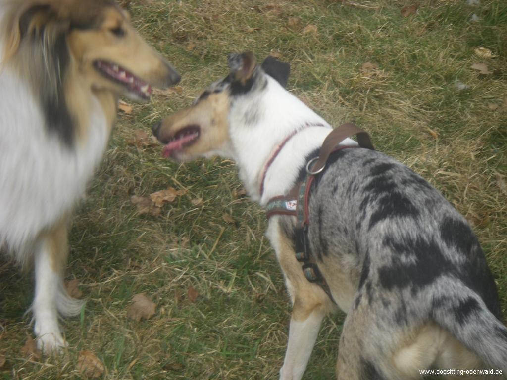 dogsitting_odenwald_0015_4