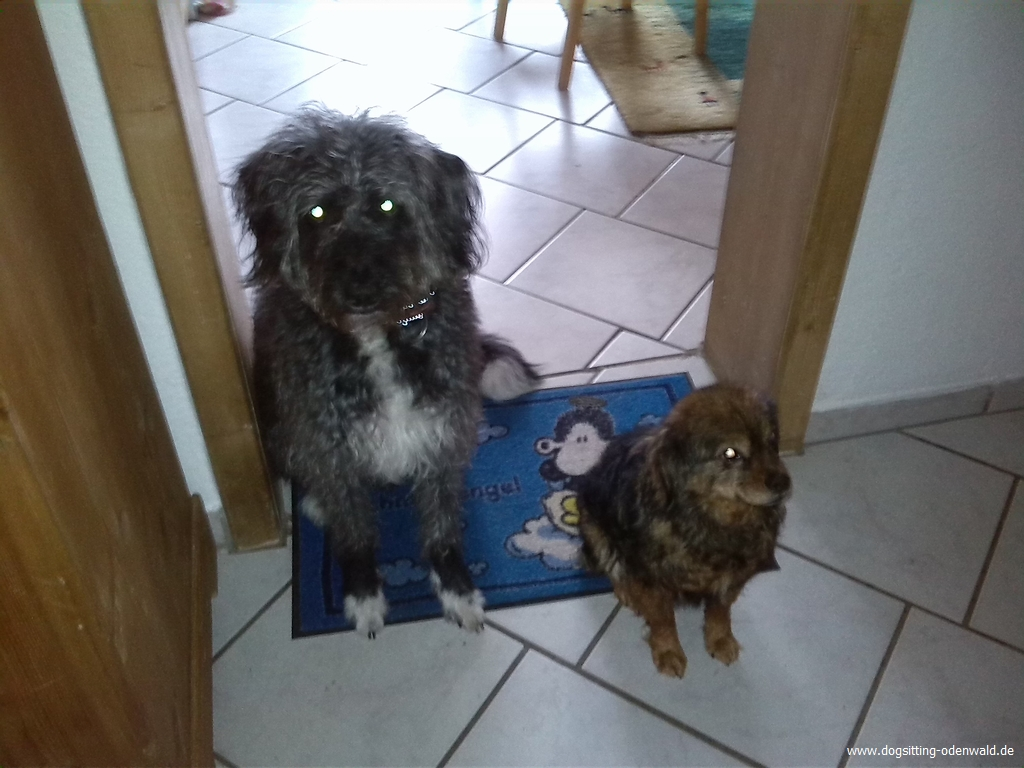 dogsitting_odenwald_0015_5