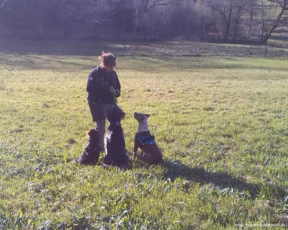 dogsitting_odenwald_0017