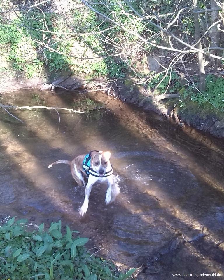 dogsitting_odenwald_0021