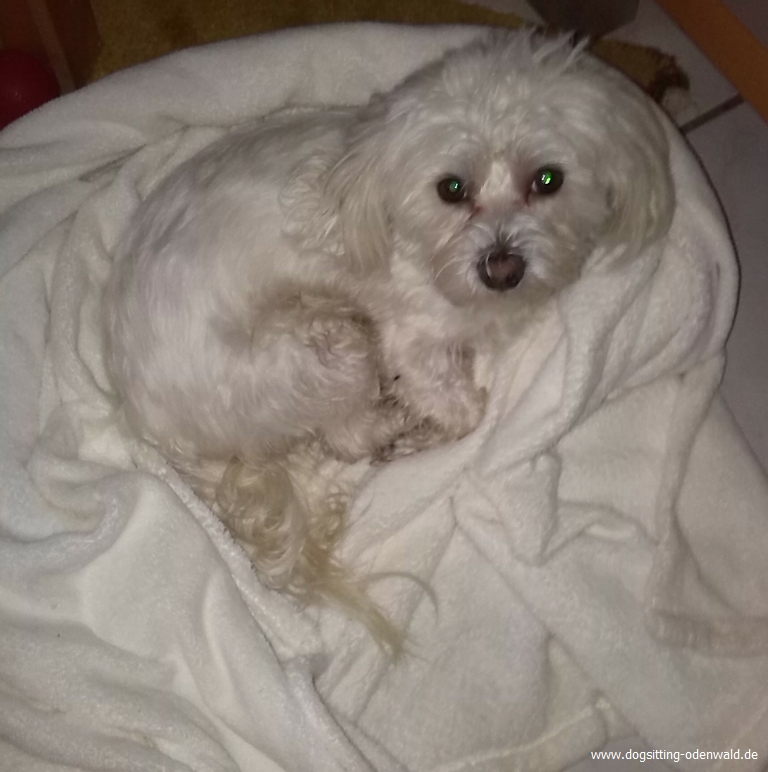 dogsitting_odenwald_0021_3