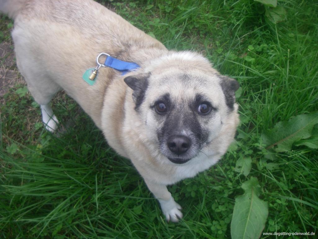 dogsitting_odenwald_0025_1