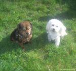 dogsitting_odenwald_0002