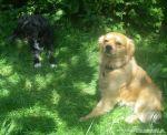 dogsitting_odenwald_0007_8