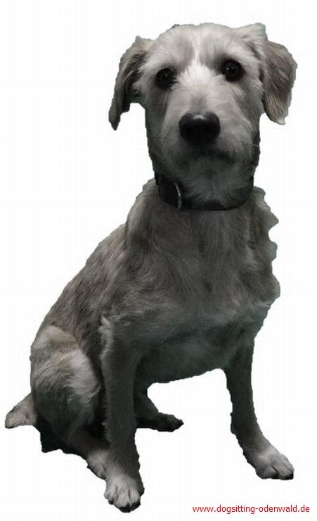 dog__0002