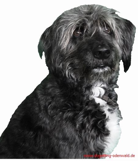 dogsitting__0003