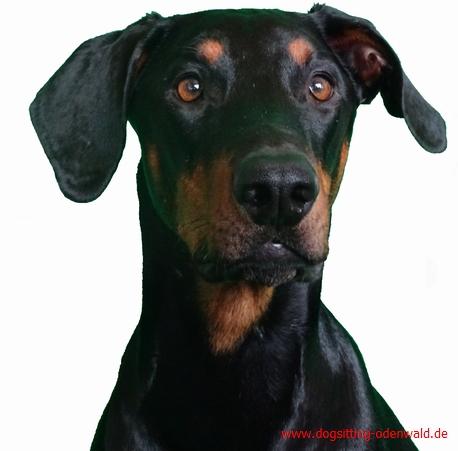 dogsitting__0007