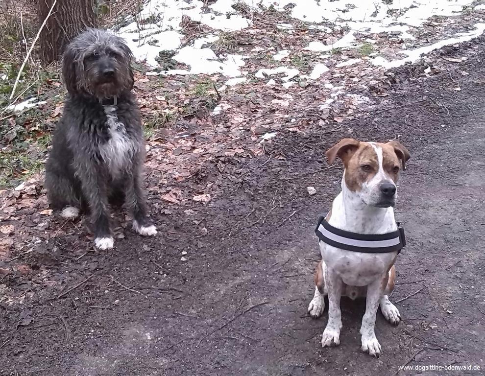 dogsitting_odenwald_0026_3