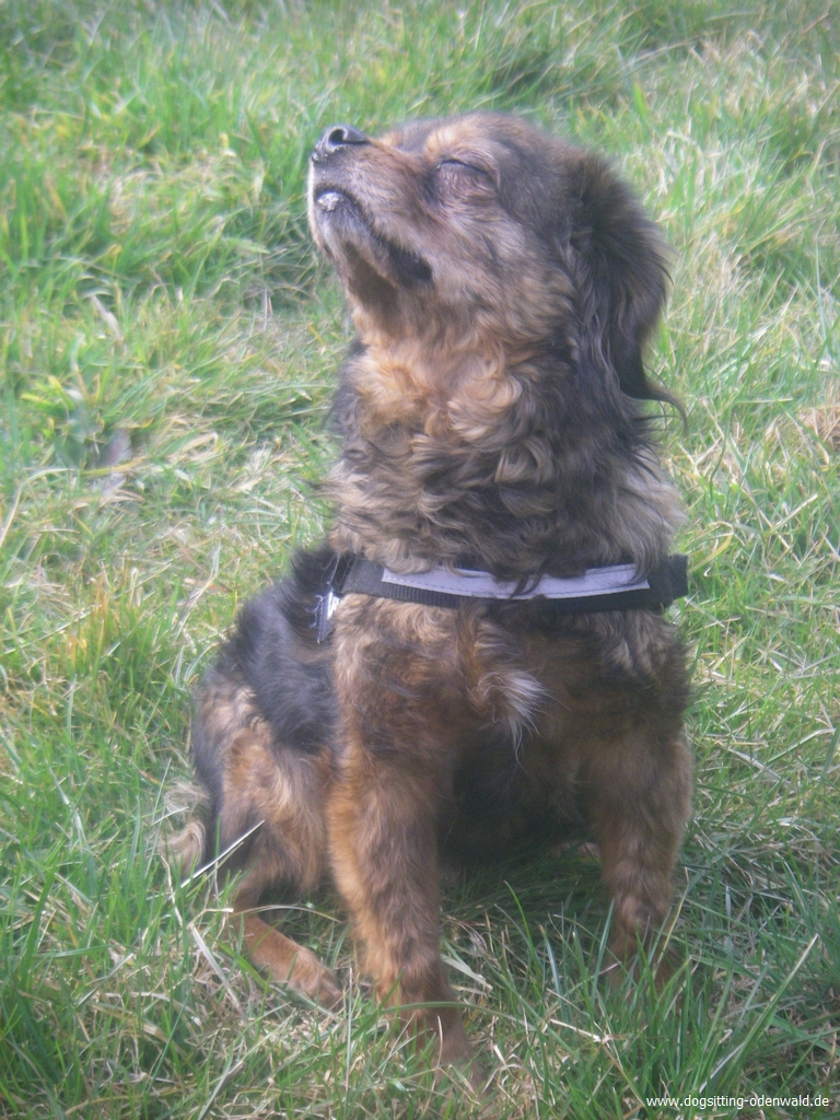 dogsitting_odenwald_0028_3