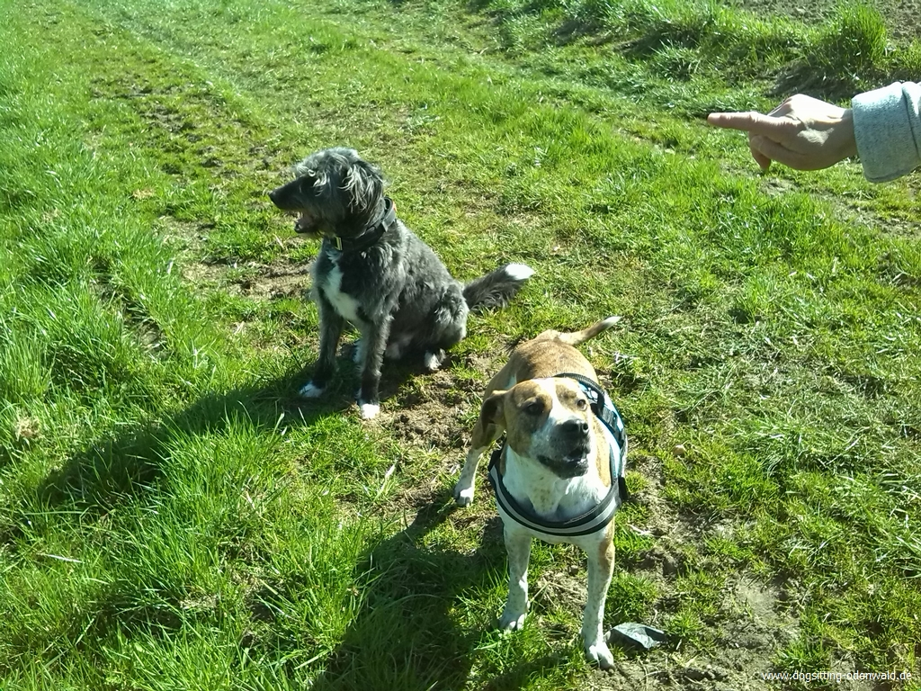 dogsitting_odenwald_0029
