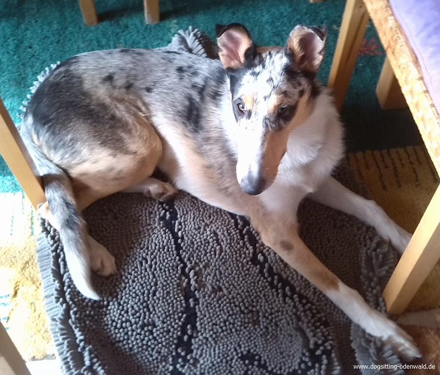 dogsitting_odenwald_0039_2