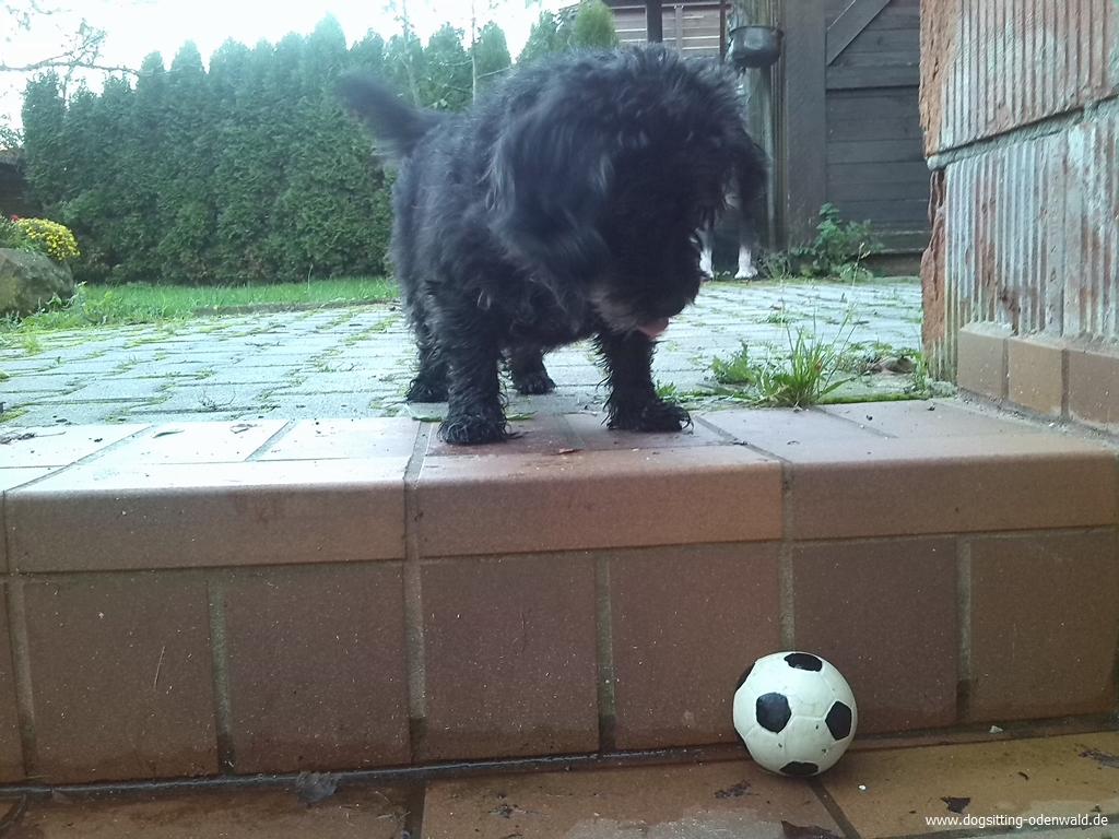 dogsitting_odenwald_0077_1